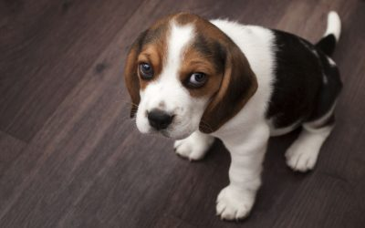 4 Tips To Help Your New Puppy With Potty Training and 1 Pet Friendly Vacuum We Recommend…